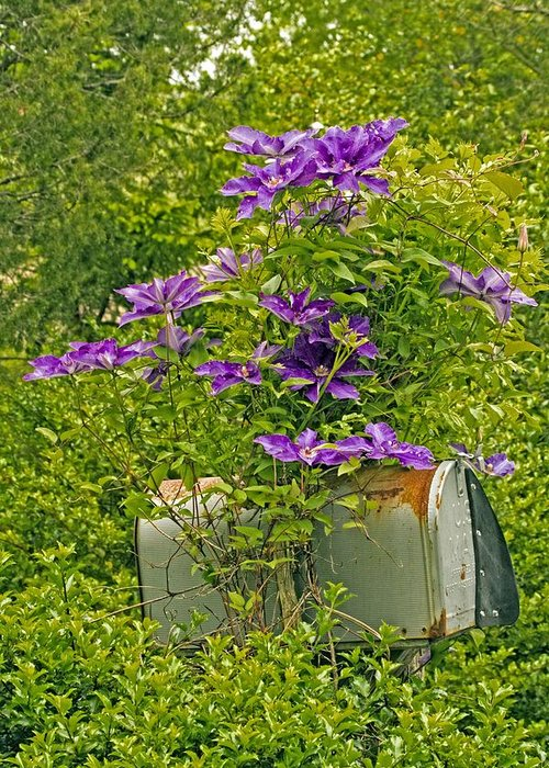 Clematis Vine Greeting Card featuring the photograph Clematis Vine On Mailbox by Constantine Gregory