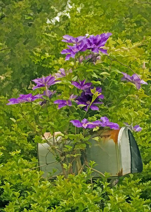 Clematis Vine Greeting Card featuring the photograph Clematis Vine On Mailbox Photo Art by Constantine Gregory