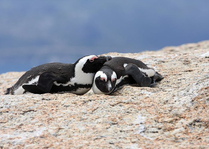Penguin Greeting Card featuring the photograph Close Bonds by Aidan Moran