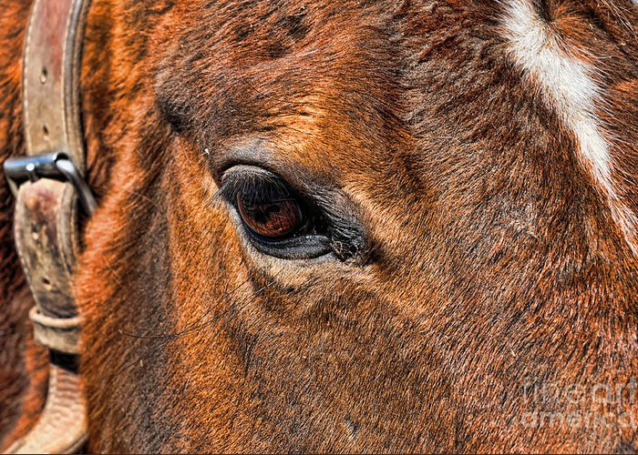 Paul Ward Greeting Card featuring the photograph Close Up Of A Horse Eye by Paul Ward