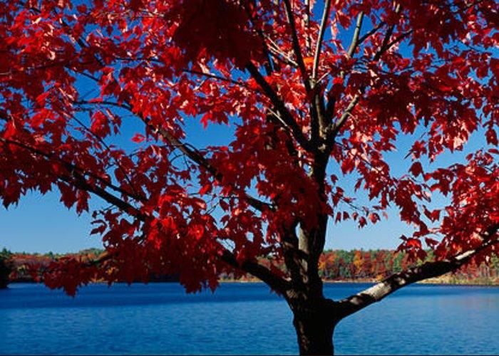 Walden Pond Photographs Greeting Cards