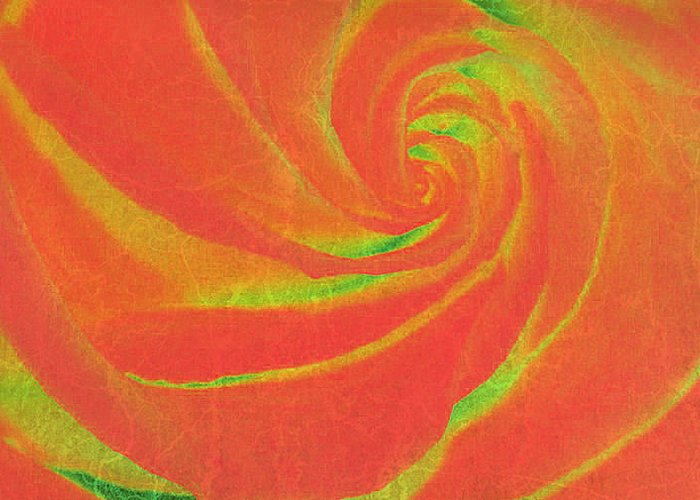 Rose Greeting Card featuring the photograph Close-up Rose by Stormys Unique  Creations