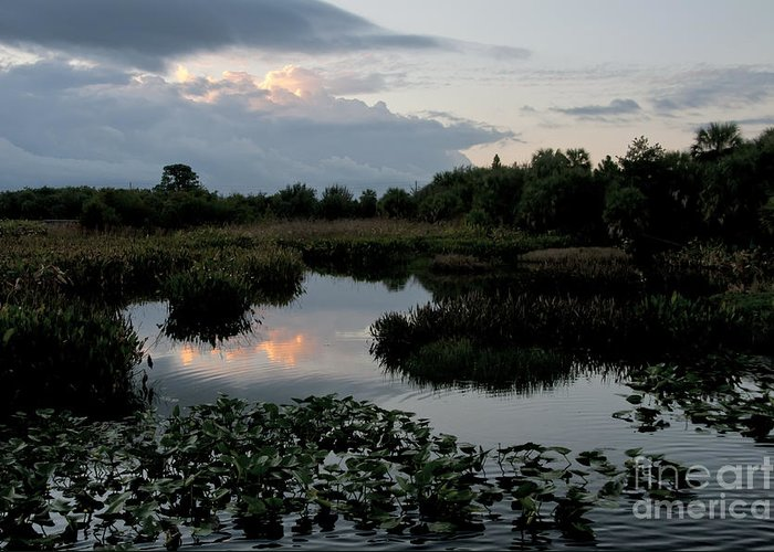 Nature Greeting Card featuring the photograph Clouds Over Green Cay Wetlands by Mark Newman