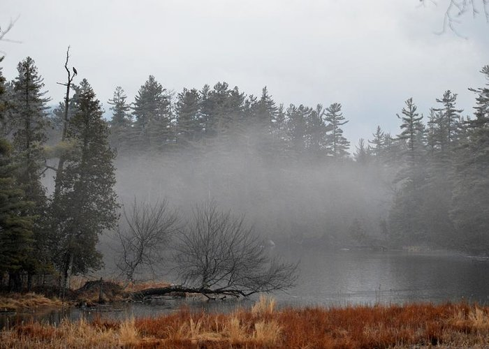 Fog Greeting Card featuring the photograph Cloudy Embrace by Thomas Phillips