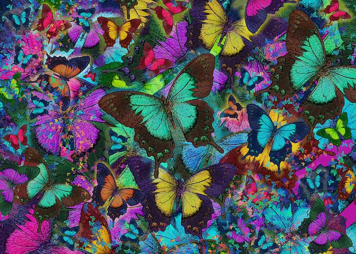 Alixandra Mullins Greeting Card featuring the photograph Cloured Butterfly Explosion by Alixandra Mullins