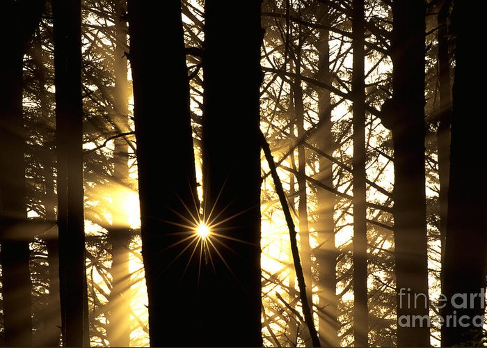 Coastal Forest Greeting Card featuring the photograph Coastal Forest by Art Wolfe