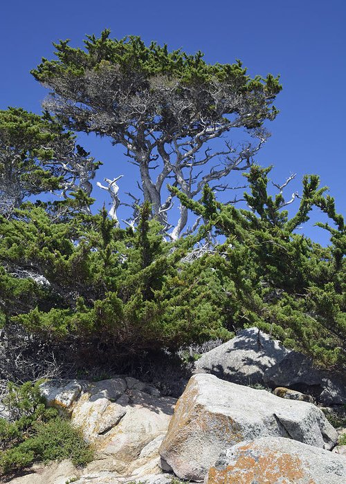Point Lobos Greeting Card featuring the photograph Coastal Trees In California's Point Lobos State Natural Reserve by Bruce Gourley