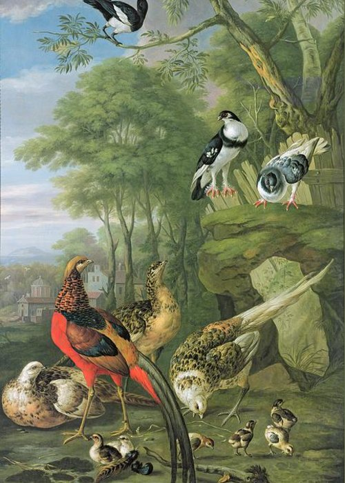 Ornithology Greeting Card featuring the painting Cock Pheasant Hen Pheasant And Chicks And Other Birds In A Classical Landscape by Pieter Casteels