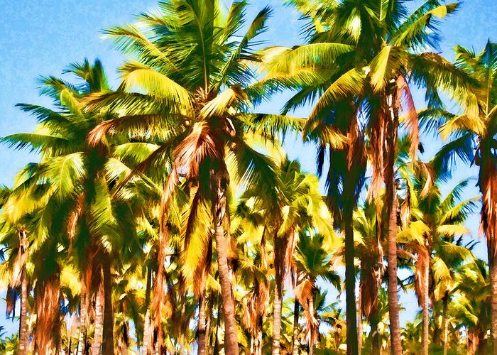 Coconut Trees Greeting Card featuring the photograph Coconut Trees by Joe Carini