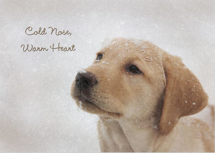 Yellow Lab Greeting Card featuring the photograph Cold Nose Warm Heart by Lori Deiter