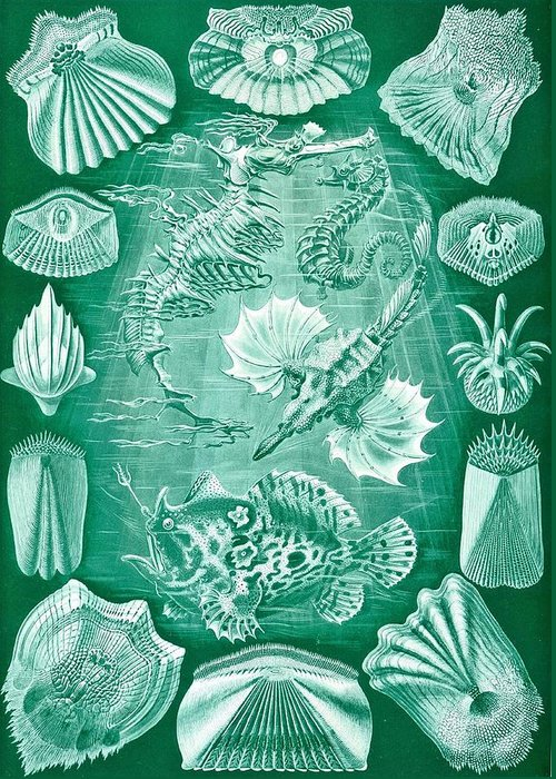 Taxonomy Greeting Card featuring the drawing Collection Of Teleostei by Ernst Haeckel
