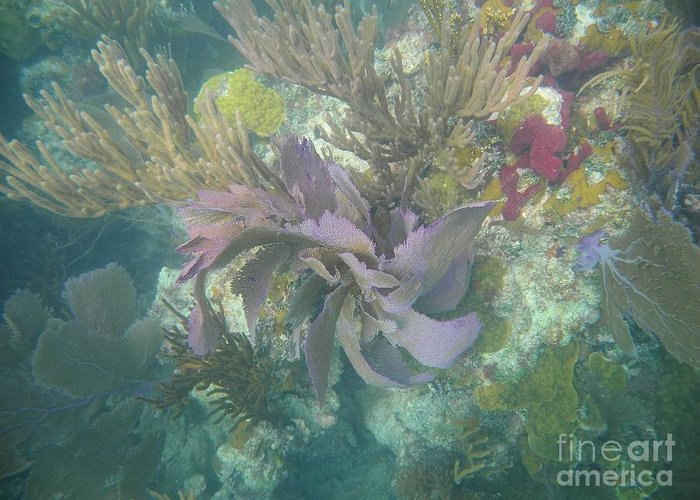 Biscayne National Park Greeting Card featuring the photograph Color Corals by Adam Jewell