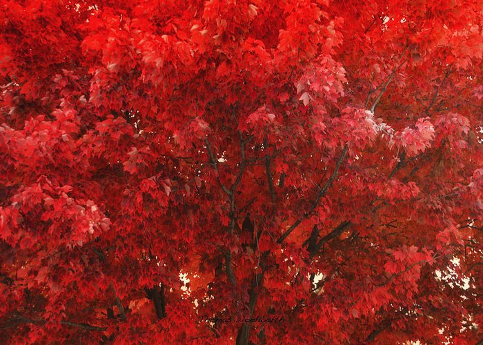 Autumn Greeting Card featuring the photograph Color In The Tree 02 by Thomas Woolworth