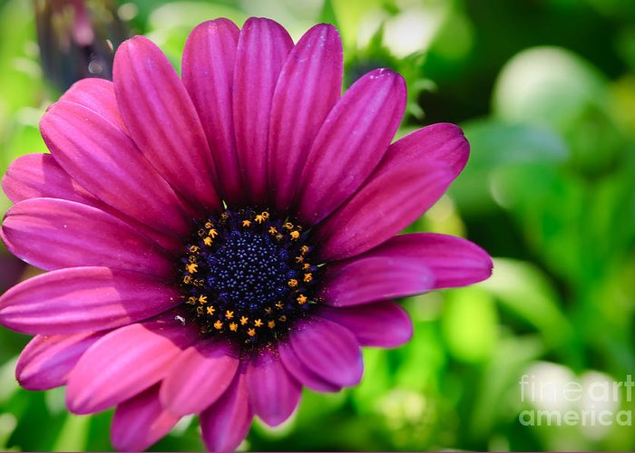 Macro Greeting Card featuring the photograph Color Madness by Charles Dobbs