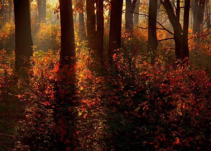 2008 Greeting Card featuring the photograph Color On The Forest Floor by Robert Charity