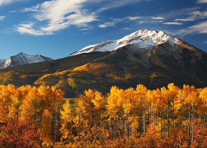 Aspen Greeting Card featuring the photograph Colorado Gold by Darren White
