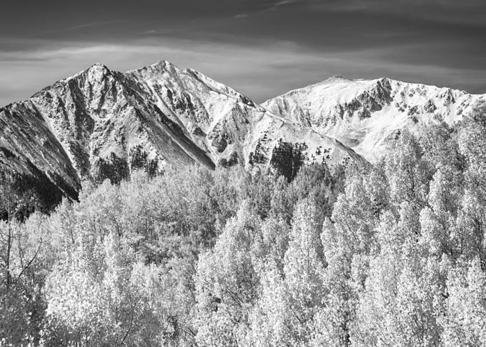 Snow Greeting Card featuring the photograph Colorado Rocky Mountain Autumn Magic Black And White by James BO Insogna