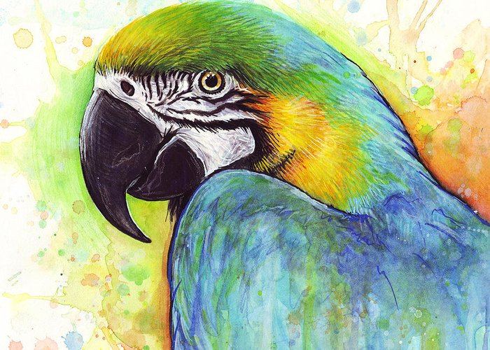 Colorful Birds Greeting Cards