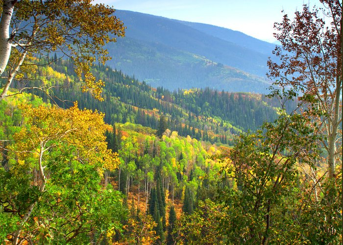 Colorful Colorado Turning Aspens Mountain Landscape Scene Greeting Card featuring the photograph Colorful Colorado by Brian Harig