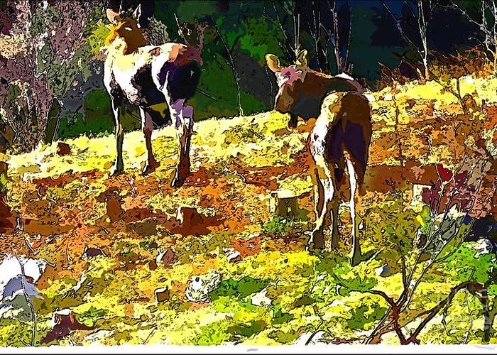 Colorful Moose Greeting Card featuring the photograph Colorful Moose by Barbara Griffin