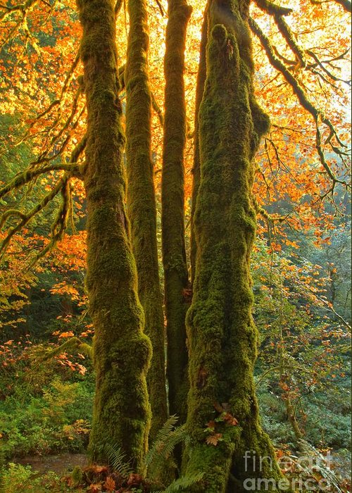 Oregon Rainforest Greeting Card featuring the photograph Colors In The Rainforest by Adam Jewell