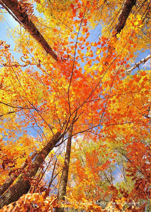 Portrait Greeting Card featuring the photograph Colors Of Leaves Yellows Oranges 2884 by Marie Fierek