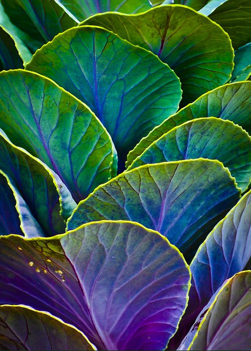 Organic Greeting Card featuring the photograph Colors Of The Cabbage Patch by Christi Kraft