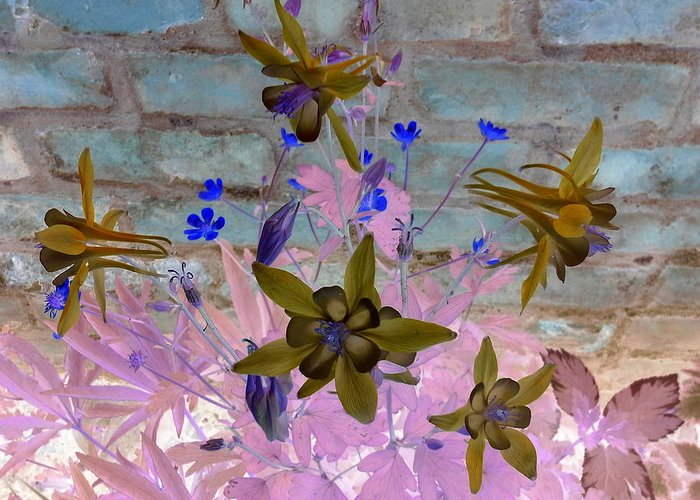 Botanical. Flower. Columbine.  Greeting Card featuring the photograph Columbine In Negative by Debbi Saccomanno Chan