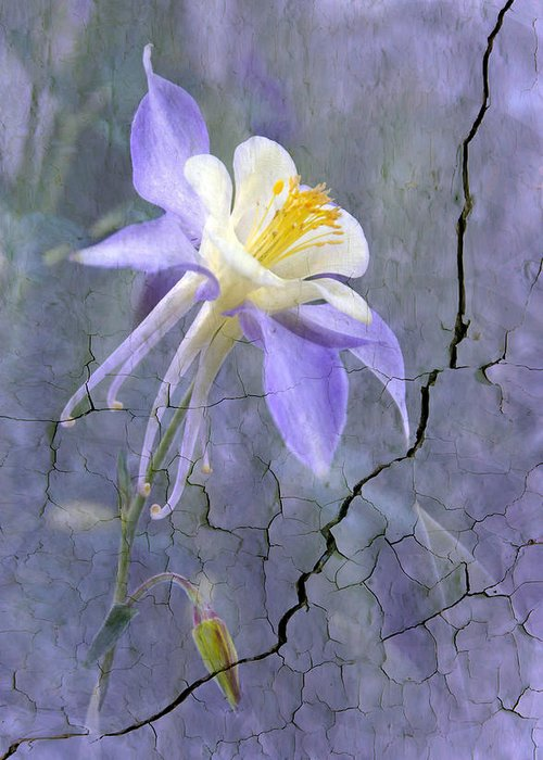 Wall Photography. Greeting Card featuring the photograph Columbine On Cracked Wall by James Steele