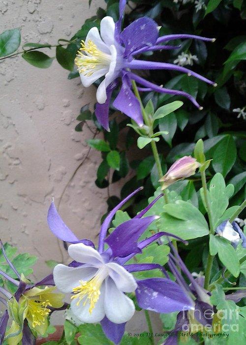 Columbines Exquisite Blooms Greeting Card featuring the photograph Columbines Exquisite Blooms by DJ Laughlin