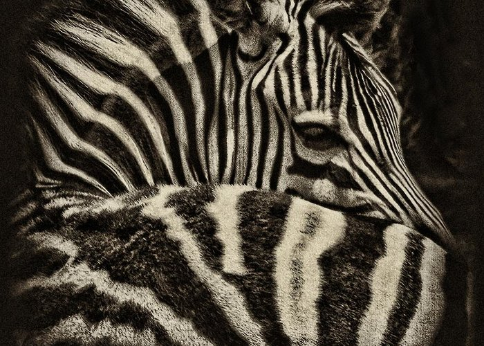 Zebra Greeting Card featuring the photograph Comfort by Andrew Paranavitana