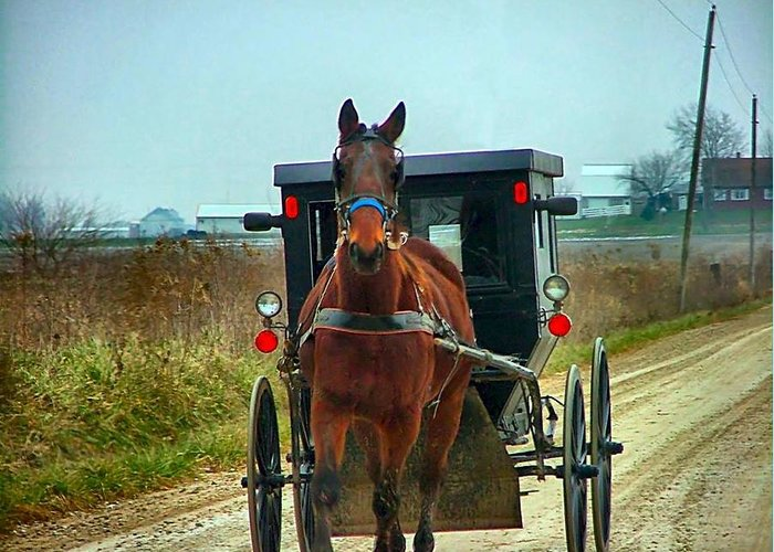 Amish Greeting Card featuring the photograph Coming My Way by Julie Dant