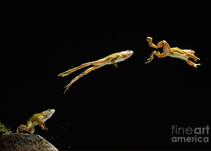 Animal Greeting Card featuring the photograph Common Frog Leaping by Stephen Dalton