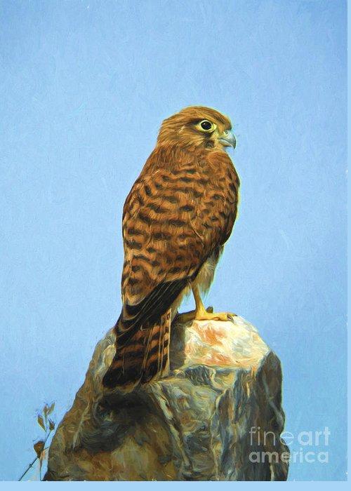 Common Kestrel Greeting Card featuring the digital art Common Kestrel Falco Tinnunculus by Perry Van Munster