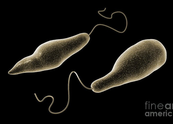 Model Organism Greeting Card featuring the digital art Conceptual Image Of Euglena by Stocktrek Images