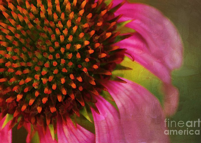 Painterly Greeting Card featuring the photograph Coneflower by Darren Fisher