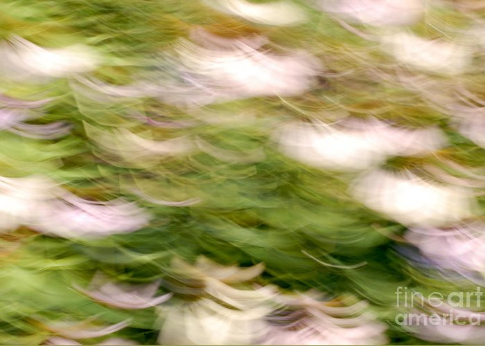 Blurred Motion Greeting Card featuring the photograph Coneflowers In The Breeze by Paul W Faust - Impressions of Light