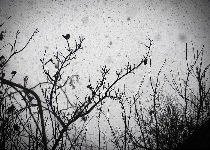 Silhouette Greeting Card featuring the photograph Confusing In The Snow by Taylan Apukovska