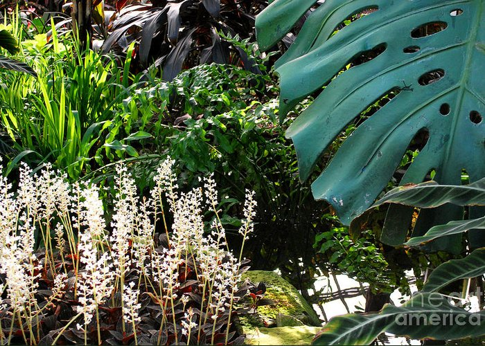 Ferns Greeting Card featuring the photograph Conservatory Leaves by Nancy Mueller
