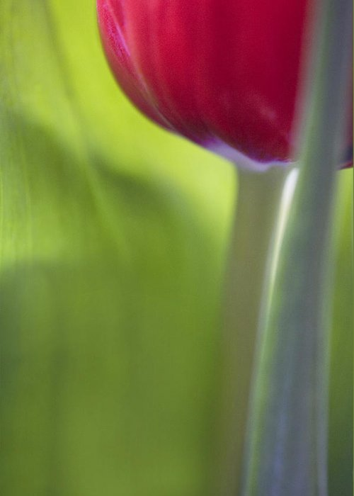 Tulip Greeting Card featuring the photograph Contemporary Tulip Close Up by Natalie Kinnear