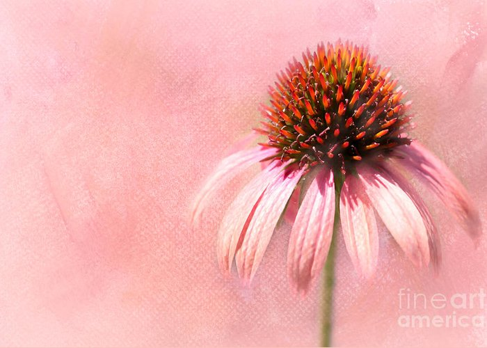 Art Greeting Card featuring the photograph Cool And Pink by Sabrina L Ryan