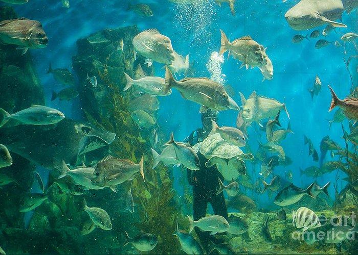 Aquarium Greeting Card featuring the photograph Cool Aquarium by Ray Warren