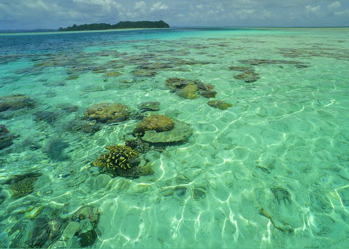 Water's Edge Greeting Card featuring the photograph Coral Paradise by Tammy616