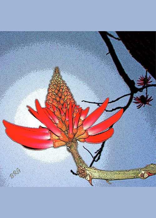 Tropical Tree Greeting Card featuring the photograph Coral Tree by Ben and Raisa Gertsberg