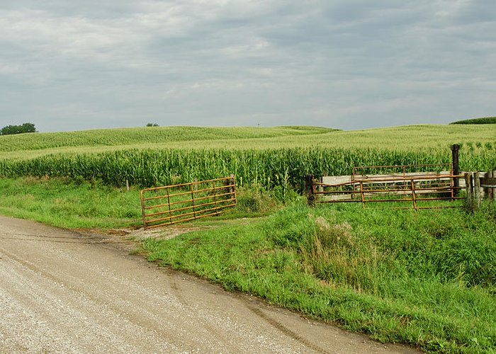 Corn Field Greeting Card featuring the photograph Corn Clouds Sun Rusty Gate by Wilma Birdwell