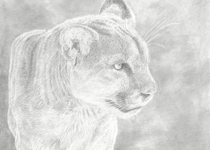Cougar Mountain Lion Greeting Card featuring the drawing Cougars Gaze by Laura Klassen
