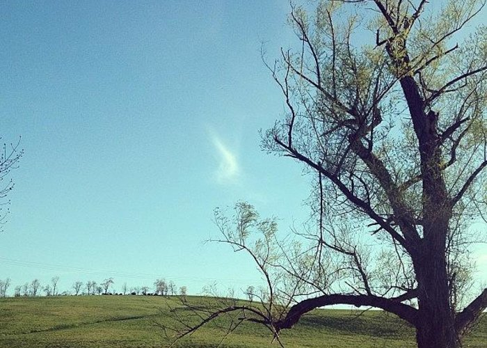 Blue Greeting Card featuring the photograph #country #countryside #tree #bluesky by Amber Campanaro