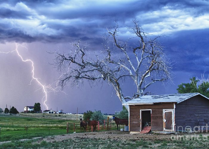 Country Greeting Card featuring the photograph Country Horses Lightning Storm Ne Boulder County Co Hdr by James BO Insogna