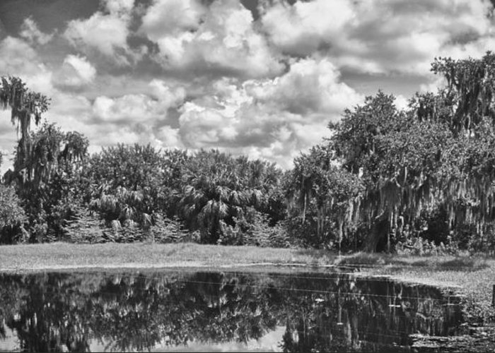 Florida Greeting Card featuring the photograph Country Lake 2 by Skip Nall