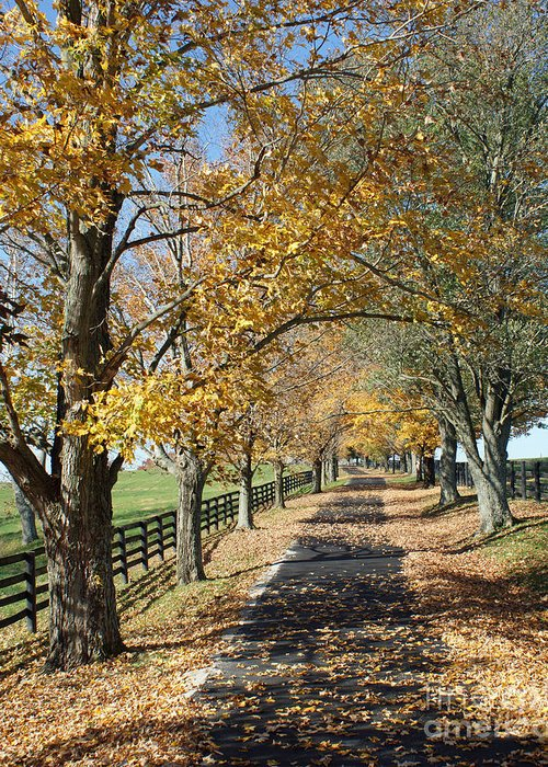 Horse Farms Greeting Card featuring the photograph Country Lane by Roger Potts